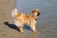 Max traut sich sogar ins Wasser!