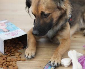 Hundefutter, Ernährung, Hunde, Tipps, Dash-button, Hundeernährung, ratgeber
